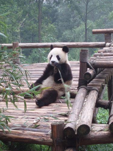 p pini re villeroy culture bambous. Black Bedroom Furniture Sets. Home Design Ideas